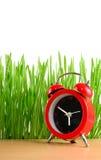 Poche sveglia rossa ed erba verde bagnata isolate su bianco Fotografia Stock