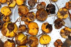 Pochi aggplants asiatici maturi secchi, secchi per ottenere il fondo di immagine del seme fotografia stock libera da diritti