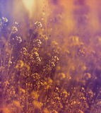 Pochi fiori del prato di bianco Fotografia Stock