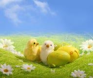Pochi pulcini di Pasqua Fotografia Stock Libera da Diritti
