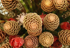 Pochodnia Imbirowy kwiat obrazy royalty free