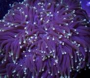 Pochodnia koral w wodzie zdjęcia royalty free