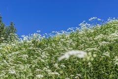 Pochyły skłon z zieloną trawą i niebieskim niebem Zdjęcia Stock