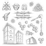 Pociągany ręcznie ikon pszczoły, miód i Obraz Royalty Free