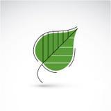 Pociągany ręcznie ilustracja prosty brzozy drzewa liść odizolowywający Obrazy Stock