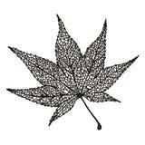 Liścia klonowy rysunek Zdjęcie Stock