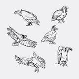 Pociągany ręcznie ołówkowe grafika Ptaki zdobycza set Fotografia Stock