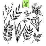 Pociągany ręcznie wektorowa ilustracja - set liście i kwiaty Obraz Stock