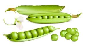 pociski tła zielonych grochu kapsuły białych Obraz Royalty Free