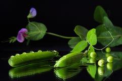 pociski tła zielonych grochu kapsuły białych zdjęcia royalty free