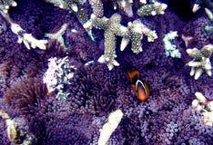 Pocket of Paradise. Intimate shots of marine life Royalty Free Stock Images