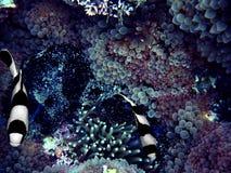 Pocket of Paradise. Intimate shots of marine life Stock Photos