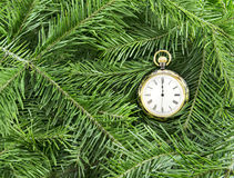 Pocket watch on conifer branches Royalty Free Stock Image