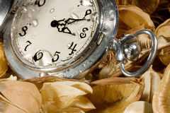 Pocket watch on dried leaves. Antique pocket watch with raindrops on the face (against the background of dried flowers and leaves Stock Photos