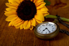 Pocket watch and sunflower Royalty Free Stock Photos