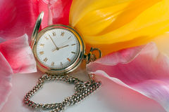 Pocket watch in tulips Stock Images