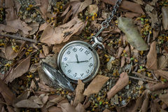 Pocketwatch with dry leaves Royalty Free Stock Images