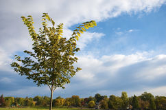 Poco árbol contra el cielo imagen de archivo libre de regalías
