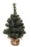 Poco árbol de navidad Imagen de archivo libre de regalías