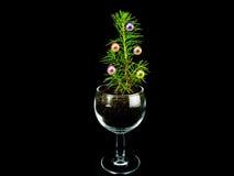 Poco árbol de navidad plantado en un vaso de medida Imagen de archivo libre de regalías