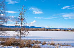 Poco árbol descubierto por un lago congelado Imagen de archivo