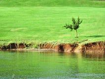 Poco árbol en césped al lado del lago Foto de archivo libre de regalías
