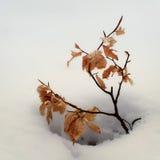Poco árbol y nieve Fotografía de archivo libre de regalías