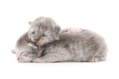 Poco 10 gatitos viejos del día. Imagen de archivo libre de regalías