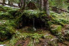 Poco agujero en el bosque Imagen de archivo