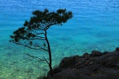 Poco albero con il mare adriatico nei precedenti, Croazia Fotografie Stock