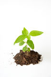 Poco albero con la crescita del suolo Immagini Stock Libere da Diritti