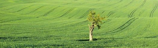Poco albero nel paesaggio panoramico con il trattore trascina Fotografia Stock