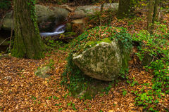 Poco angolo in una foresta. Montseny, Sapin. Fotografie Stock Libere da Diritti