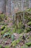 Poco bosque cerca de Grenchen fotografía de archivo