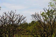 Poco bosque del árbol en la luz del sol Imágenes de archivo libres de regalías