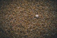 Poco cáscara en la arena de la playa imagen de archivo libre de regalías