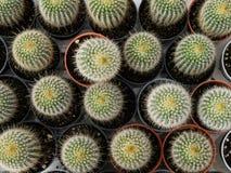 Poco cactus Fotos de archivo