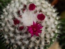 Poco cactus Imagen de archivo