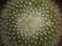 Poco cactus Fotografía de archivo