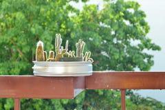 Poco cactus Foto de archivo