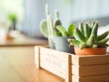 Poco cactus en cafetería del vintage con luz del día fotos de archivo libres de regalías