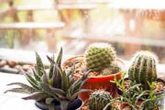 Poco cactus en pote cray en fondo borroso Imagen de archivo