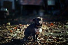 Poco cane sta splendendo fotografia stock