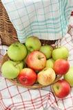 Poco canestro in pieno delle mele verdi e rosse del giardino Fotografie Stock Libere da Diritti