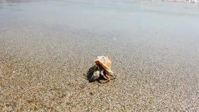 Poco cangrejo de ermitaño con la cáscara hermosa que se arrastra en la playa de la arena al mar almacen de metraje de vídeo