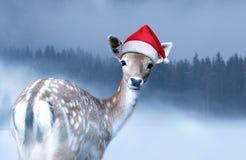 Poco cervatillo dulce en el sombrero rojo de Santa Claus está considerando en la cámara la tarde de la Navidad fotografía de archivo