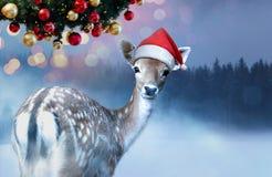 Poco cervatillo dulce en el sombrero rojo de Santa Claus está considerando en la cámara el tiempo de la Navidad imagen de archivo