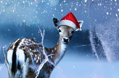 Poco cervatillo dulce en el sombrero rojo de Santa Claus está mirando adentro una ventana congelada la noche santa imágenes de archivo libres de regalías