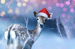 Poco cervatillo dulce en el sombrero rojo de Santa Claus está mirando adentro una ventana congelada la noche santa Fondo de Bokeh foto de archivo libre de regalías