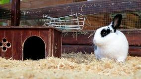 Poco conejos en un parque zoológico del contacto Niño lindo con el conejito metrajes